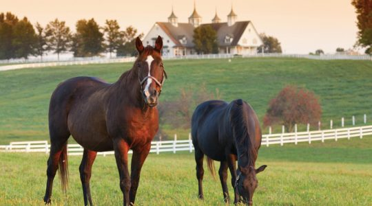 Horse & Specialty Property Valuations